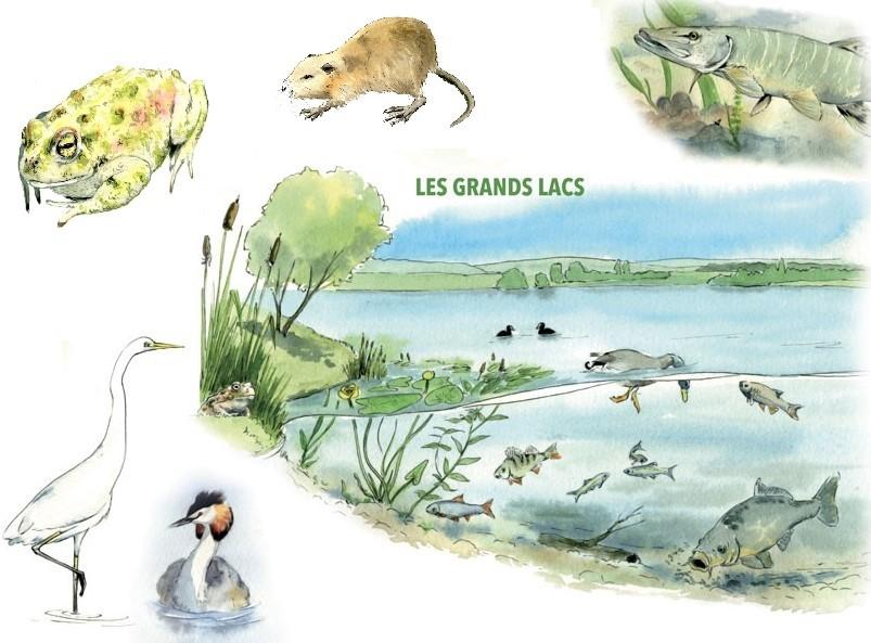 Aquarelle les grands lacs