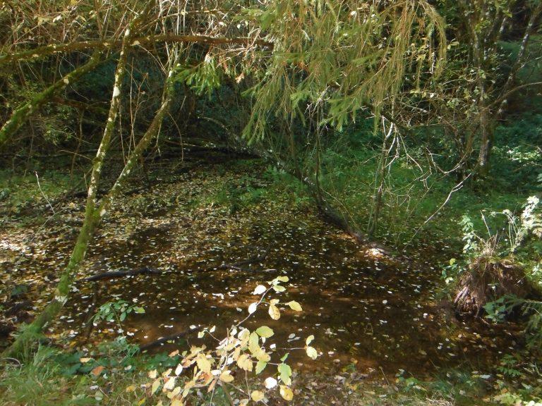 Des sources, des ruisseaux (ici Sources du Viaur)