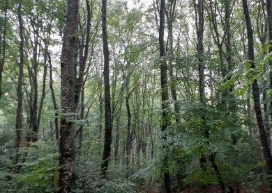 Zoom La gestion de la forêt